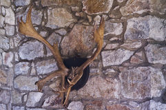 Elk antlers mounted Stock Photo