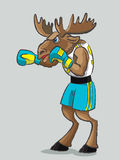 Elk - boxer. The mighty elk is in a boxing form and gloves Stock Photography