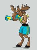 Elk - boxer Stock Photography