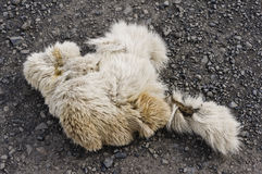 Elk or cariboo fur closeup Stock Image
