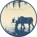 Elk in the drinking water Stock Photography