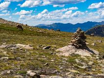 Elk Grazing on Rocky Mountain Summit Royalty Free Stock Images