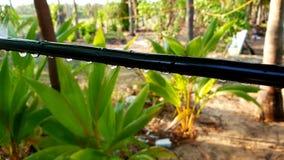 Elk Groen India Samsung S9 plus Stock Afbeeldingen