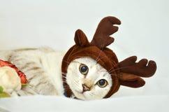 Elk Hat Kitten Royalty Free Stock Photo