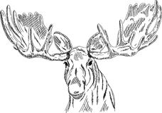 Elk head Royalty Free Stock Photos