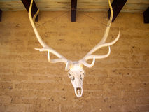 Elk head and antlers royalty free stock images