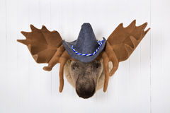 Elk head with antlers and a white felt bavarian hat with blue wh Stock Images