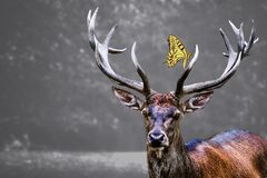 Elk head and a yellow butterfly on it with blurred background