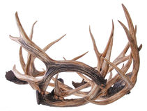 Elk horns isolated on a white Royalty Free Stock Image