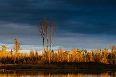 Elk Island National Park Royalty Free Stock Photo