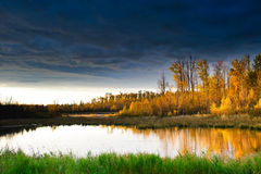 Elk Island National Park Stock Images