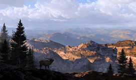 Elk Lookout Silhouette. A silhouetted elk looking into the distance mountains in the morning sunlight stock photography