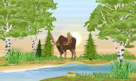 Elk male with big horns bent over the river. River bank with grass, trees and birch trees vector illustration