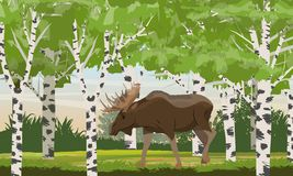 Elk male with big horns in a birch forest. Wild animals of Eurasia and North America vector illustration