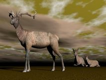 Elk male protection - 3D render Stock Photos