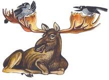 Elk or moose Stock Photo