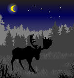 Elk in the night forest Royalty Free Stock Photo