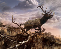 Elk Passage Stock Photo