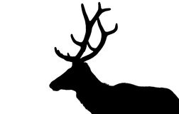 Elk in silhouette. A Roosevelt elk outlined against the sky, and rendered in black and white stock illustration