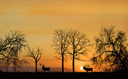 Elk Silhouette. Two bull elk surrounded by the deep orange land Royalty Free Stock Photos