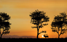 Elk Silhouette Stock Photo
