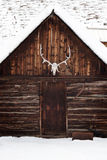 Elk Skull on Old Rustic Cabin Stock Photography
