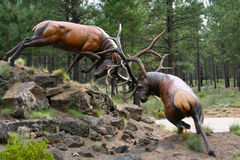 Elk stags fighting Royalty Free Stock Photo