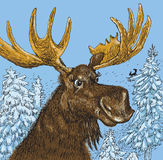 Elk (vector) Stock Photos