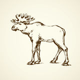 Elk. Vector drawing Royalty Free Stock Photo