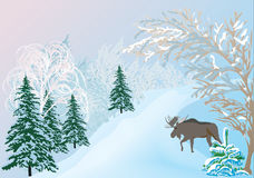 Elk in winter forest Stock Image