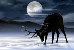 Elk Winter Meadow Stock Photos