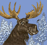 Elk in the winter wood. Vector format. The cheerful elk in the winter wood talks to a squirrel royalty free illustration