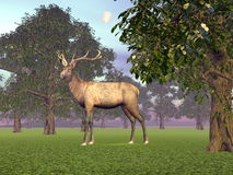 Elk in the woods - 3D render Royalty Free Stock Photography