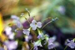 Elke bloem is uniek stock fotografie