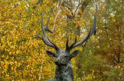 Elkhart Indiana Full Size Bronze Scultpture of a Majestic 6 x 6 Elk Stock Photography