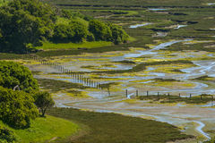 Elkhorn Slough Reserve, Monterey Bay, California. The 1700-acre Reserve hosts programs that promote education, research, and conservation in Elkhorn Slough. Moss stock photo