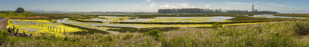 Elkhorn Slough Reserve, Monterey Bay, California. The 1700-acre Reserve hosts programs that promote education, research, and conservation in Elkhorn Slough. Moss royalty free stock photo