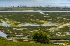 Elkhorn Slough Reserve, Monterey Bay, California. The 1700-acre Reserve hosts programs that promote education, research, and conservation in Elkhorn Slough. Moss stock image