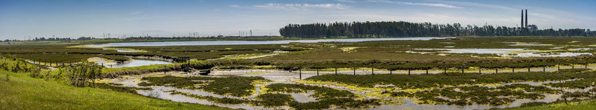 Elkhorn Slough Reserve, Monterey Bay, California. The 1700-acre Reserve hosts programs that promote education, research, and conservation in Elkhorn Slough. Moss stock photos