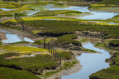 Elkhorn Slough Reserve, Monterey Bay, California. The 1700-acre Reserve hosts programs that promote education, research, and conservation in Elkhorn Slough. Moss stock photography