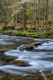 Elkmontrivier, Great Smoky Mountains Stock Foto's