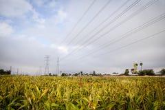 Elkraftlinjer över fält fotografering för bildbyråer