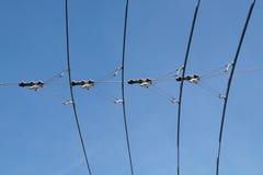 Elkraftlinjer som är nödvändiga för rörelsen av spårvagnbussar Spårvagntrådar Royaltyfri Bild
