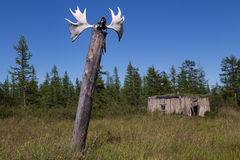 Elks horns on a pole and an old barn. Royalty Free Stock Photography