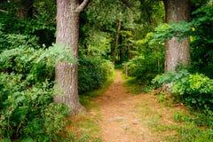 Elkwallow足迹在Shenandoah国家公园,弗吉尼亚 免版税库存照片