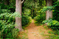 The Elkwallow Trail in Shenandoah National Park, Virginia. Royalty Free Stock Photos