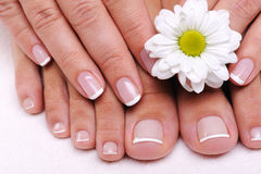 Ell-groomed female toes Royalty Free Stock Images