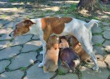 Ella-perro con los perritos 1 Imagen de archivo