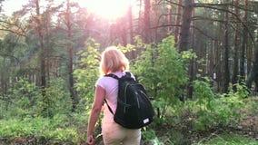 Ella viaja a través del bosque en la puesta del sol almacen de metraje de vídeo