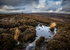 Ellarcarr pik Timble North Yorkshire Heather Moorland arkivfoton